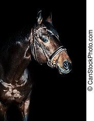 馬, 背景, 黒, 低いキー, 肖像画