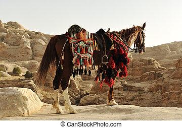 馬, 衣服, 伝統的である, アラビア人, ヨルダン, petra