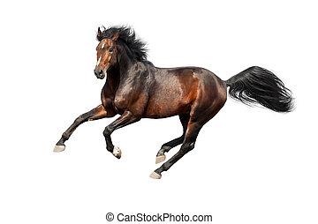 馬, 被隔离, 在懷特上