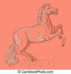 馬, 見られた, 側, prancing