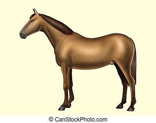 馬, 解剖学, -, 体の部位, -, いいえ, テキスト