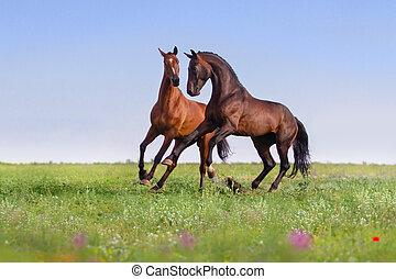 馬, 跑, 二