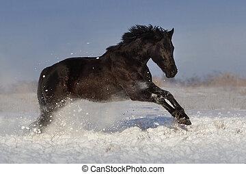 馬, 跑, 在, 冬天, 領域