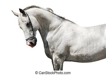 馬, 隔離された