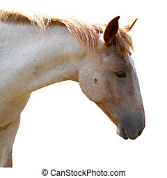 馬, 隔離された, white.