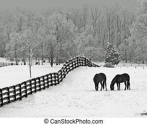 馬, 雪が多い, 牧草地, &