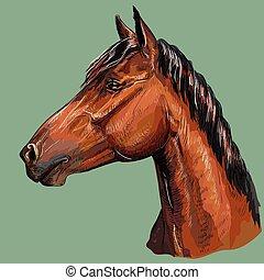 馬, 鮮艷, 圖畫, portrait-6, 手