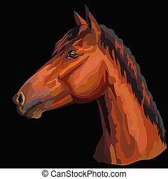 馬, 鮮艷, portrait-6