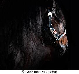 馬, 黒い背景