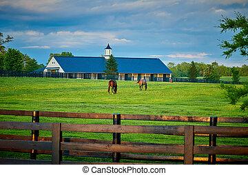 馬, 2, フィールド, 牧草, サラブレッド