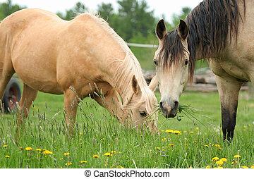 馬, 2, 牧草
