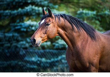 馬,  backgroud, 綠色, 頭
