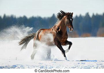 馬, gallops, 在, 冬天, 背景