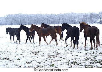 馬, snow.