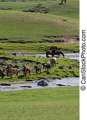 馬, yurt, mongolian, 典型的, 風景, ステップ