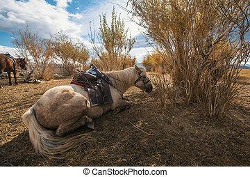 馬, yurt, steppes, mongolian, 西部, mongolia.