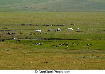 馬, yurts, ステップ