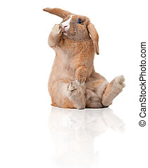 驚奇, 很少, bunny, 坐