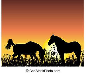 马, 日落, 背景