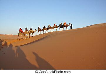 骆驼, 旅行, 在中, 撒哈拉沙漠沙漠, merzouga, 摩洛哥, 北方非洲