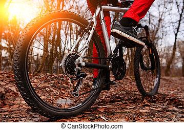 骑车者, 山, 角度, 形迹, 自行车, 森林, 摆脱, 察看, 日出, 低