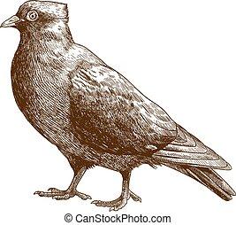骨董品, 鳩, イラスト, 彫版, 鳥