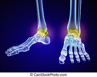 骨骼, 腳, -, injuryd, 碎石, bone., xray, 觀點。, medically, 准确, 3d, 插圖