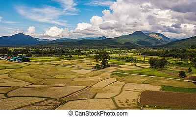 高く, フィールド, 光景, 角度, タイ