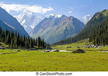 高く, 山, kyrgyzstan, ピークに達しなさい