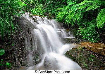 高く, 山, rainforest, 川, stream.