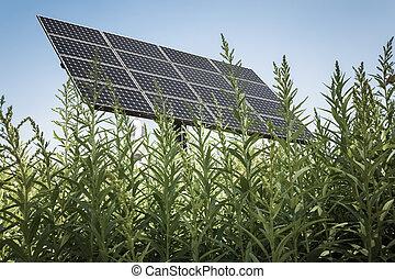 高く, 草, 太陽 パネル