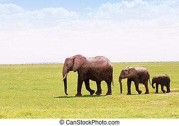 高さ, 3, 一致, アフリカの象, 引っ越し