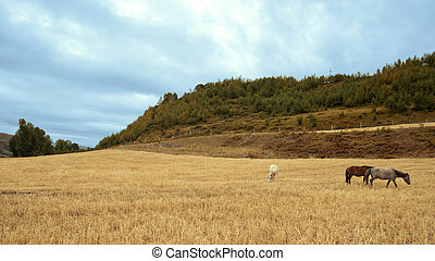 高地, 牧場