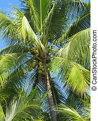 高的角度, ......的, 椰子樹