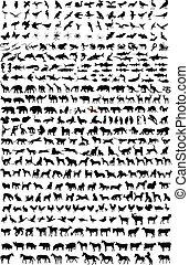 高, 質量, 動物, 黑色半面畫像