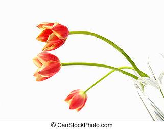 鬱金香, 在, 花瓶
