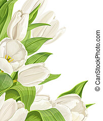 鬱金香, 白色, 背景