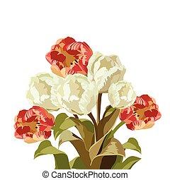 鬱金香, 白色, 花, 紅色