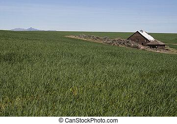 鬼, 农场, 放弃, 仍然是, 房子, 领域, 农业, 宅基