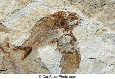 魚の化石, 上に, a, 石