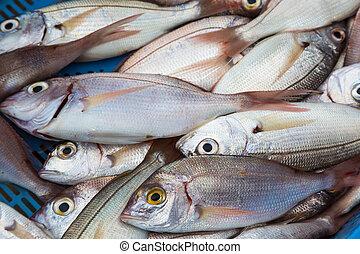 魚, 新たに, 市場, 海