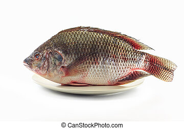 魚, tilapia, ナイル