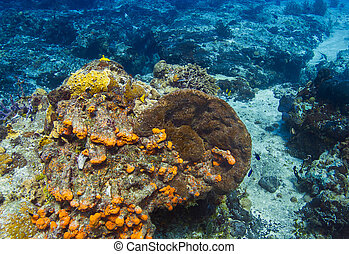 鮮艷, 珊瑚礁