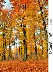 鮮艷, 秋天風景, 由于, 黃色, 樹