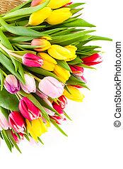 鮮艷, 郁金香, 花, 被隔离, 在懷特上