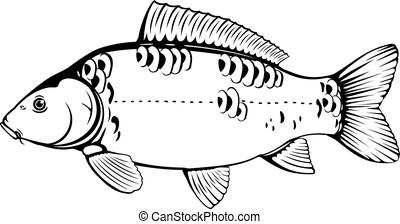 鯉, 白, 黒, fish, 鏡