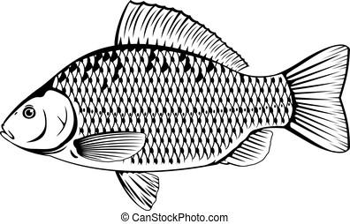 鯉, 白, crucian, 黒