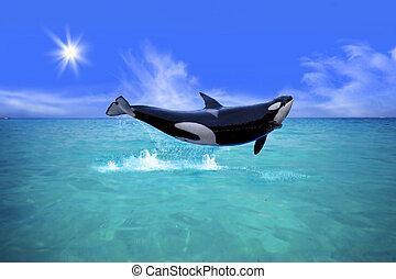 鯨魚, 殺手