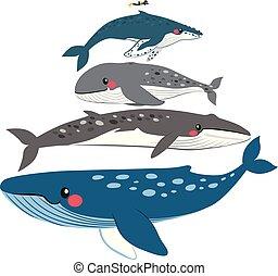 鯨魚, 規模, 比較