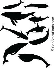鯨, シルエット
